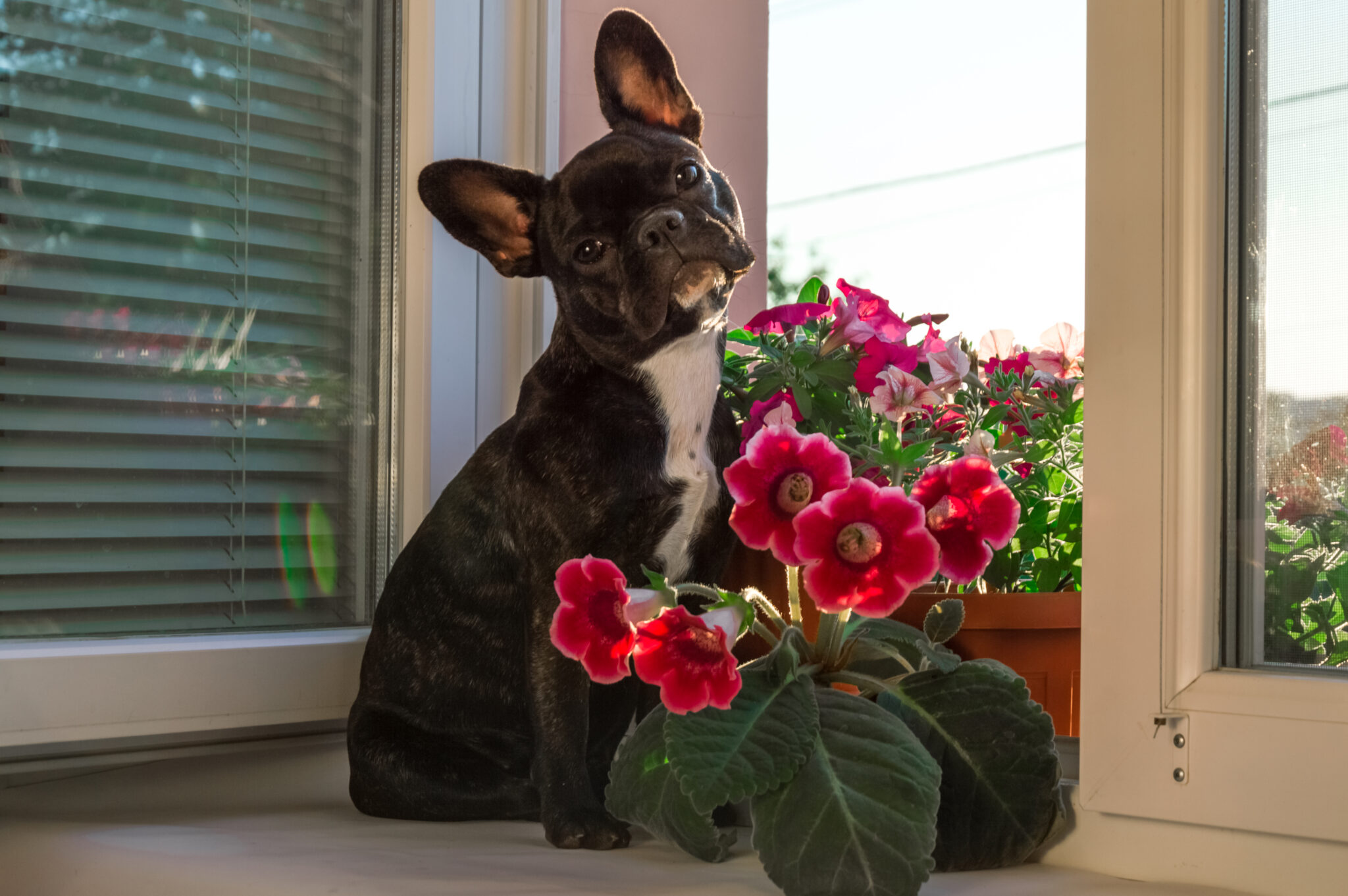 indoor plants toxic to dogs
